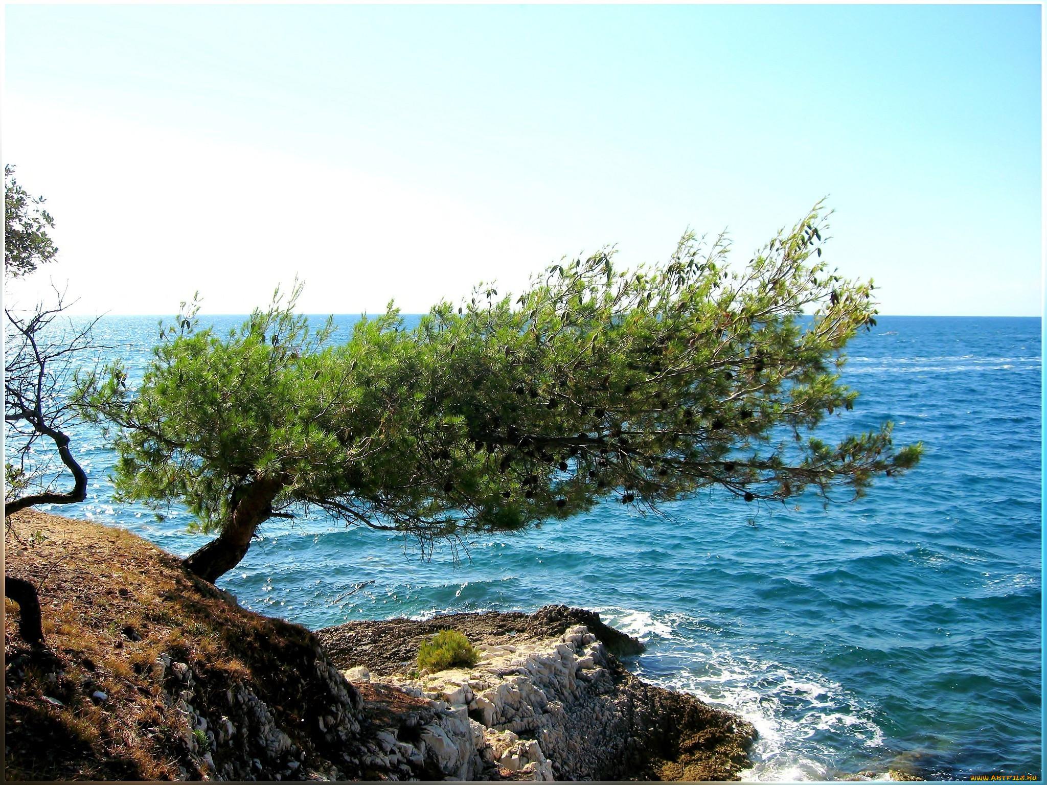 Narod И На Камнях Растут Деревья